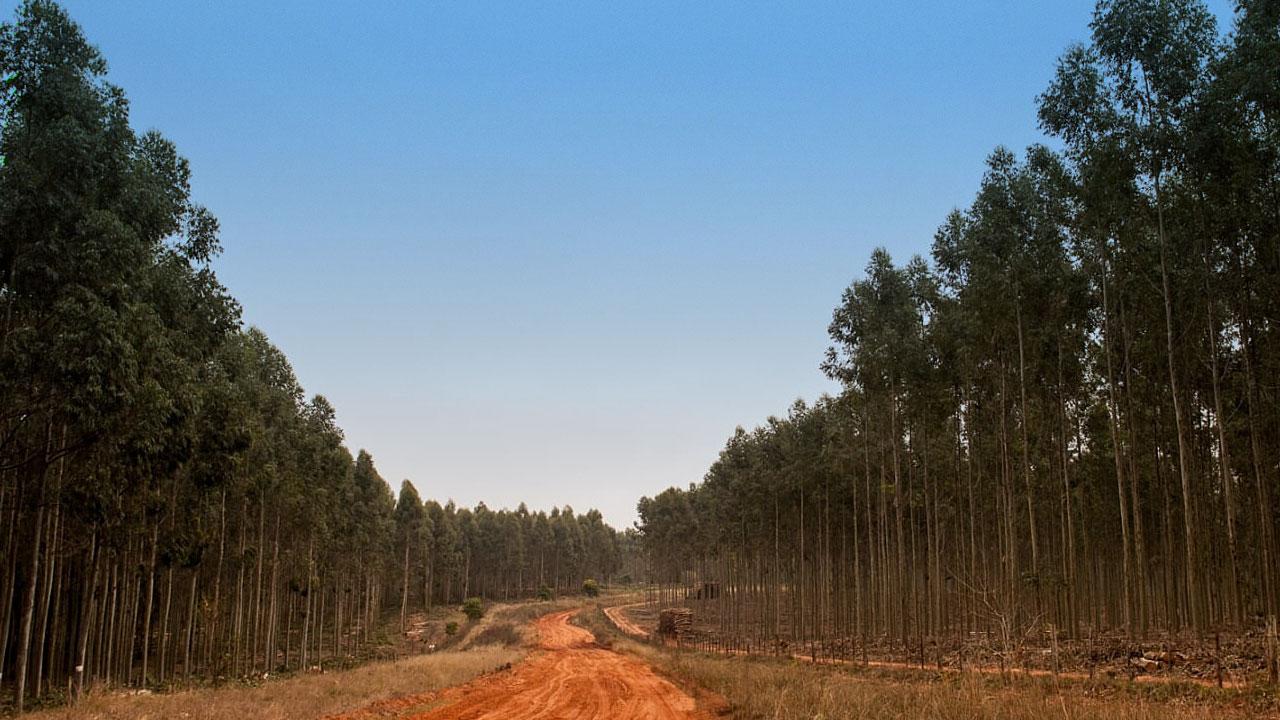 setor madeireiro no Brasil