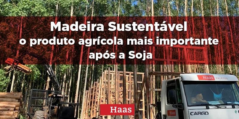 Madeira Sustentável – o produto agrícola mais importante após a Soja