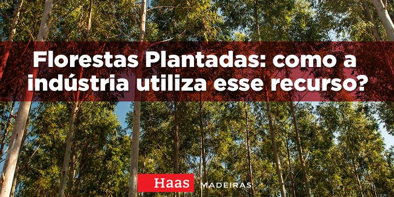 Florestas plantadas: como a indústria utiliza esse recurso?